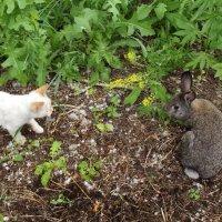Гости наших котов - кролик :: Светлана Рябова-Шатунова