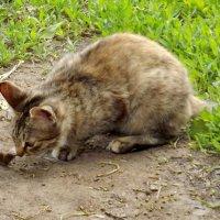 Гости наших котов - землеройка :: Светлана Рябова-Шатунова