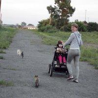Гости наших котов - провожают домой Соню :: Светлана Рябова-Шатунова