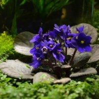 Цветы :: Ольга Беляева