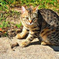 Кот и ящерица. :: Михаил Столяров