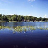 Колтушское озеро :: Владимир