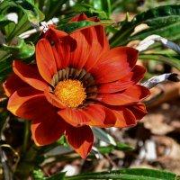 red flower :: Петр Заровнев