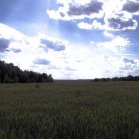 Солнечное поле :: Евгений Верзилин