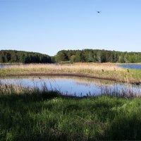 Озеро в озере :: Елена Тренкеншу