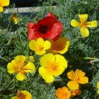 Цветы в Речном порту :: Наиля