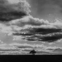 The Lonely Tree :: Виталий Шевченко