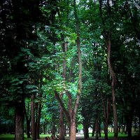 В старом парке :: Александр Сапунов