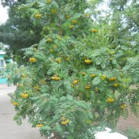 В цветах весны любое лето завязывает терпкие плоды... :: Галина
