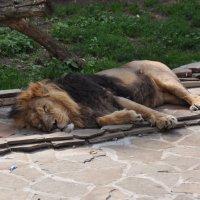Московский зоопарк :: Наташа