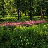 В лесу :: Сергей Григорьев