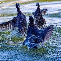 Ссора на воде... :: Николай Саржанов