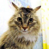Дикое котэ в ванной комнате :: Дмитрий Юдаков