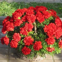 Цветы к памятнику Герою :: Дмитрий Никитин