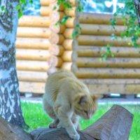 кот в сквере :: Юлия Денискина