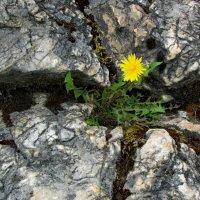 Каменный цветок :: OLLES