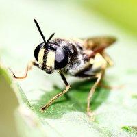 Брейся, не брейся, а на пчёлку не похожа... :: Dmitry Saltykov