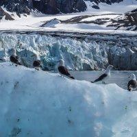буревестники на фоне ледника :: Георгий