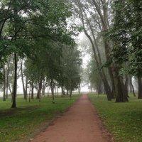 Туманное,пасмурное утро....и тишина.... :: Наталия Павлова