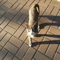 Я кот, хожу сам по себе и гуляю где вздумается )) :: Наталья Владимировна