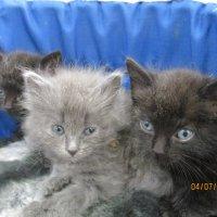 Котята в добрые руки. :: Зинаида