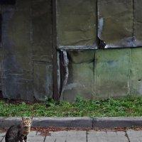 Коты Госпиталя Бурденко :: Татьяна [Sumtime]