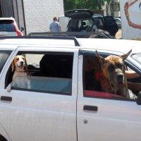 Трое в машине не считая хозяйки :: Надежда