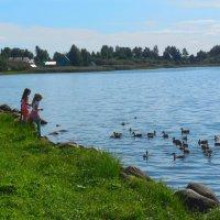 Сиверское озеро :: Надежда