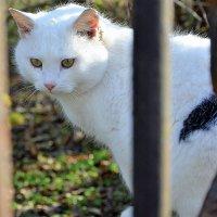 Санаторская кошка :: Ольга (crim41evp)
