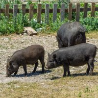 Свинки Пеппы на Ай-Петри :: Павел © Смирнов