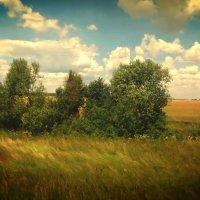 Летний этюд :: Ирина Олехнович