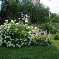 Vasara / Summer :: silvestras gaiziunas gaiziunas