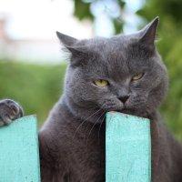 Кот в деревне :: Наталья ХХХХХ