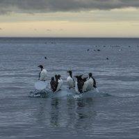 перегруженный айсберг, не доплывёт до берега ..... :: Георгий