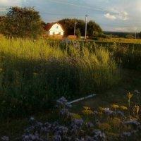 вид на  соседский дом  из  сада :: Наталья Чернушкина