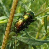 Блестяще-зелёная любофь :: Светлана Рябова-Шатунова