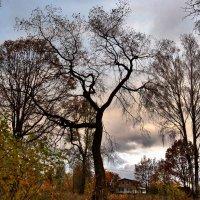 Пасмурная осень, повод к размышлениям! :: Антоха Л