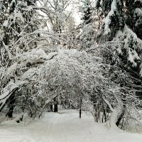 Парк зимой 2018 :: Виктор Неклюдов