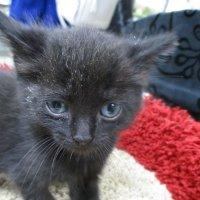 котёнок в добрые руки :: Зинаида