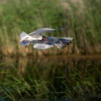 Птичья гавань! :: Александр Иващин