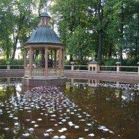 Летний сад. Менажерийный пруд :: Наталья Герасимова