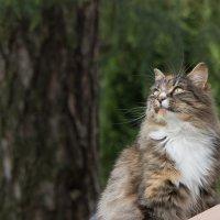 """""""Ну почему кошки не летают как птицы?..."""" :: Владимир Безбородов"""