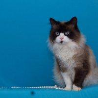 ЛАСКА, Центр помощи кошкам на Сахалине https://vk.com/laskasakhalin. Марсель :: Margarita Ласковая