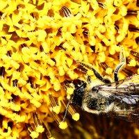 Пчелиный рай... :: Dmitry Saltykov