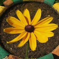 Цветок в цветке :: sm-lydmila