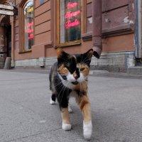 Хорошо работать кошкой в самой знаменитой пышечной Петербурга :: tipchik