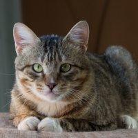 ЛАСКА, Центр помощи кошкам на Сахалине https://vk.com/laskasakhalin.Василий :: Margarita Ласковая