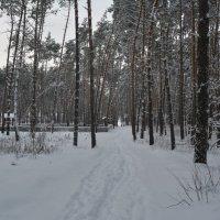 зима :: Татьяна Лаптева