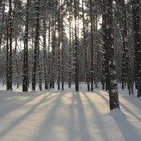 Мороз и солнце :: Татьяна Лаптева