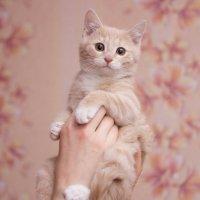 ЛАСКА, Центр помощи кошкам на Сахалине https://vk.com/laskasakhalin. Санек :: Margarita Ласковая